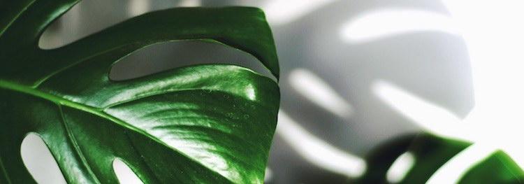 8 Ways Indoor Plants Can Improve Your Health
